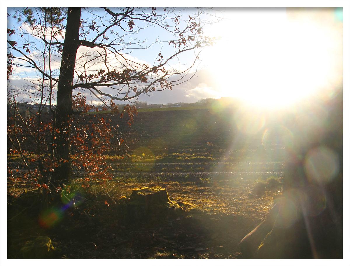 Am Waldrand bei Preunschen