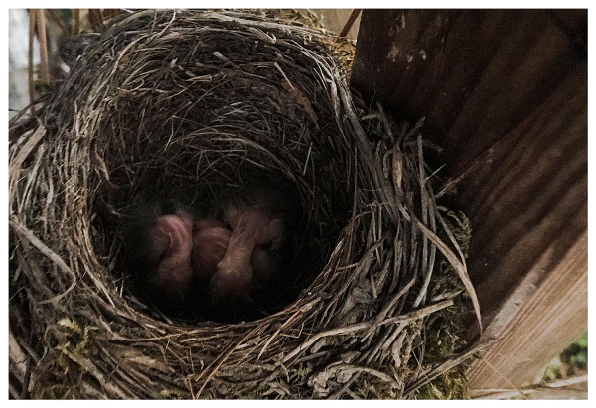 Im Vogelnest